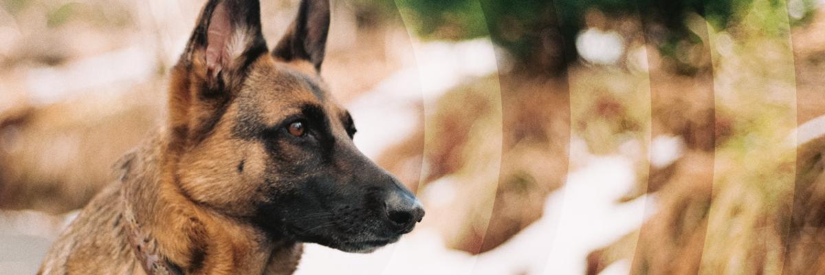 detection dog