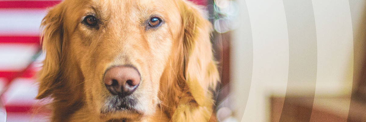 drug sniffing dogs